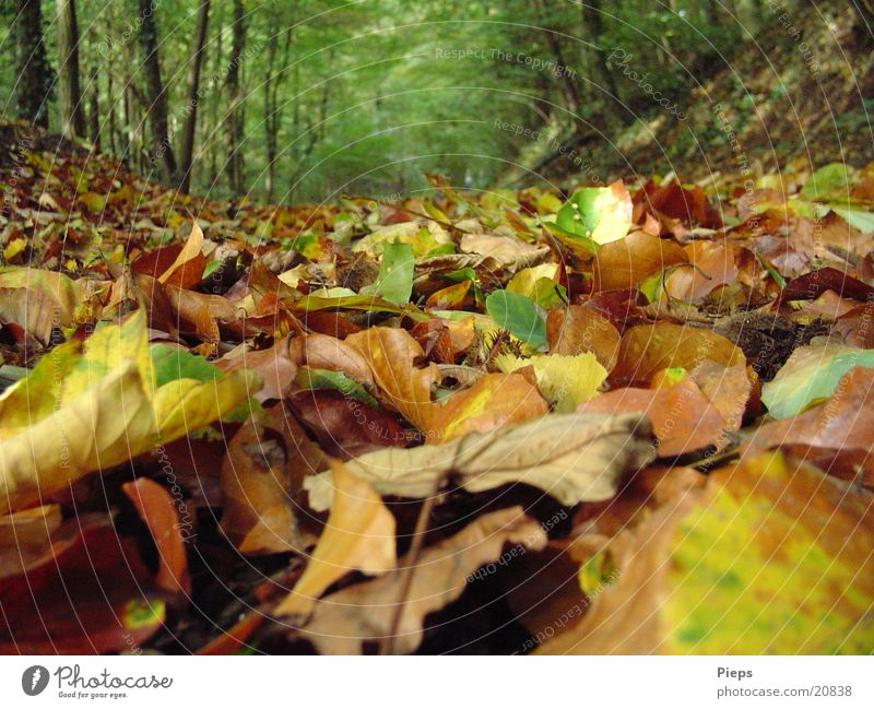 Nature Old Tree Vacation & Travel Leaf Loneliness Forest Autumn Landscape Earth To go for a walk Transience Dry Footpath Autumn leaves Limp