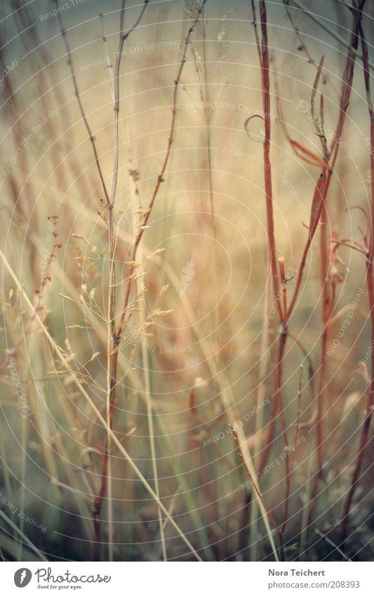 Nature Beautiful Plant Summer Autumn Meadow Blossom Grass Dream Lanes & trails Park Landscape Field Environment Perspective Esthetic