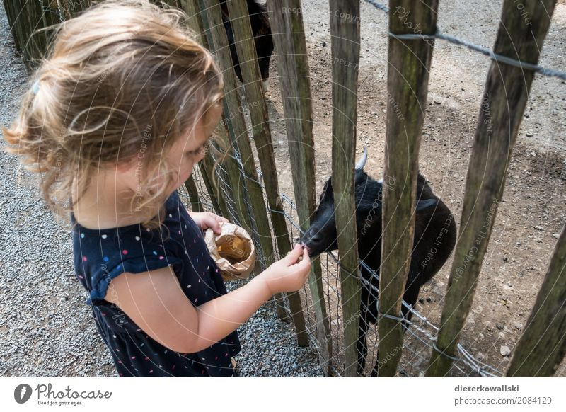 Feed animals Parenting Kindergarten Child Study Agriculture Forestry Human being Toddler Girl 3 - 8 years Infancy Environment Nature Animal Park Meadow