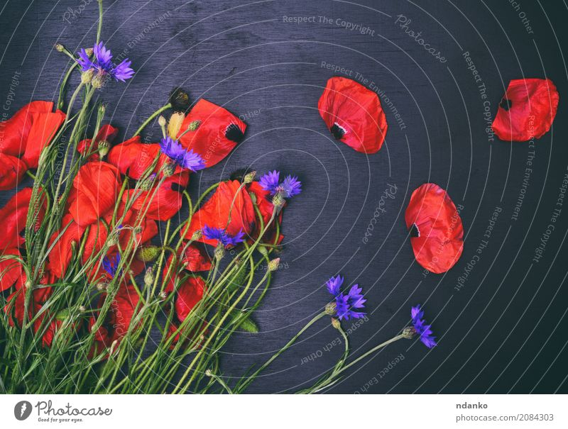 Bouquet of field poppies and cornflowers Beautiful Summer Feasts & Celebrations Nature Plant Leaf Blossom Blossoming Natural Wild Blue Green Red Black Colour