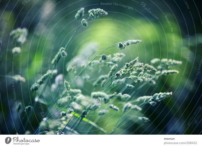 Nature Beautiful Plant Summer Environment Grass Multiple Growth Symbols and metaphors Blossoming Blade of grass Pollen Faded Wild plant