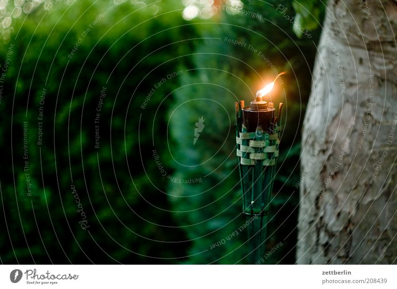 Nature Tree Vacation & Travel Lamp Dark Party Garden Park Wind Candle Barbecue (event) Tree trunk Flame Belief Dusk Hedge