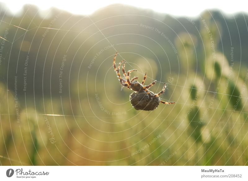 Big Spider Sky Nature Water Plant Sun Summer Flower Animal Far-off places Landscape Dark Movement Grass Horizon Earth Field