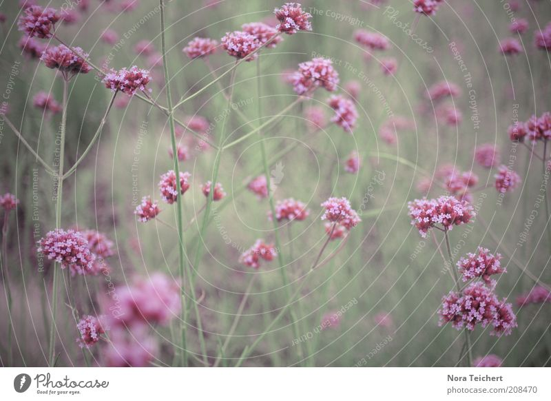 The colour purple Environment Nature Landscape Plant Spring Summer Climate Beautiful weather Flower Grass Blossom Foliage plant Wild plant Blossoming Fragrance