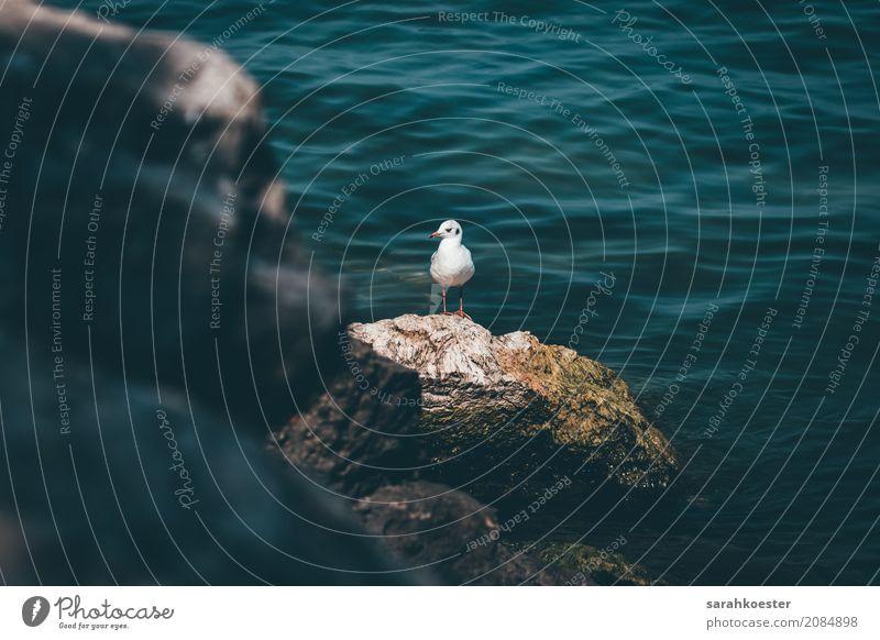 Möwe am Meer Nature Landscape Animal Water Ocean Bird Seagull Gull birds Breathe Swimming & Bathing Sit Stand Americas Holiday season Vacation & Travel