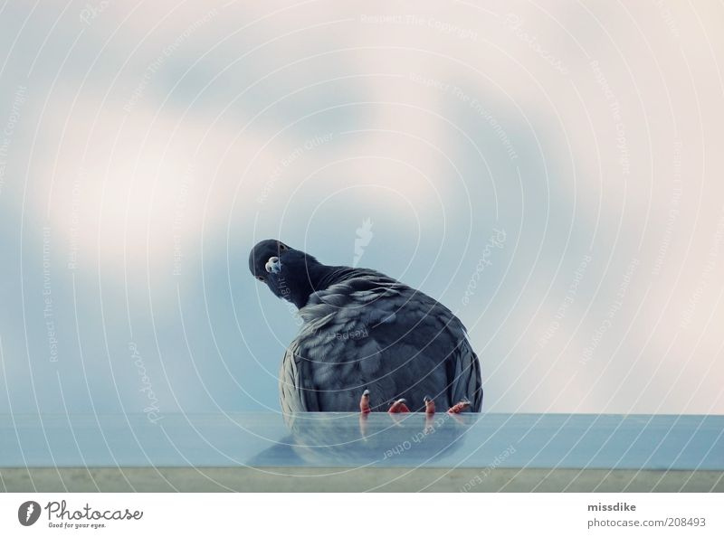 Sky Nature Blue Summer Animal Clouds Environment Gray Head Air Bird Wild animal Sit Wait Feather Roof