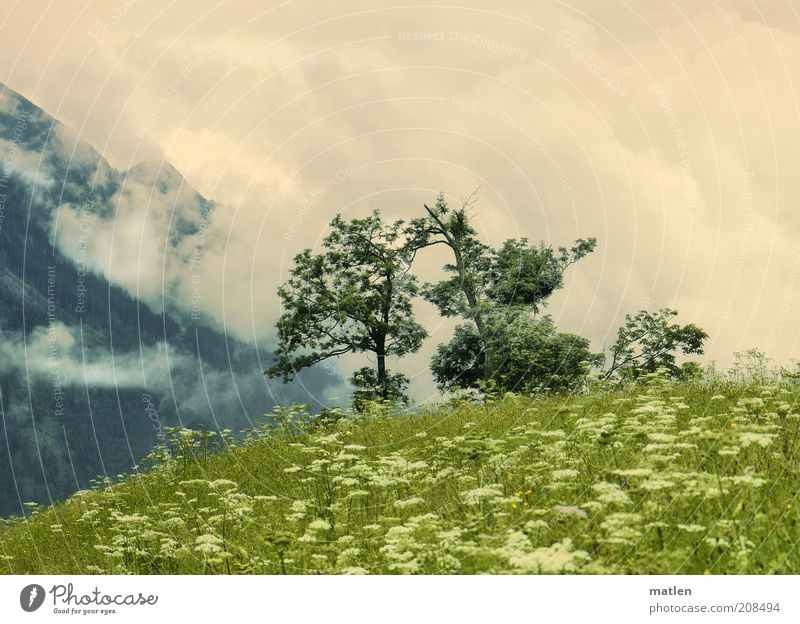 Sky White Tree Green Plant Summer Clouds Meadow Grass Mountain Freedom Landscape Fantastic Infinity Peak Fragrance