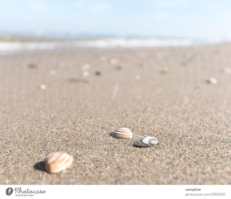 Mussels and such Vacation & Travel Tourism Far-off places Summer Summer vacation Sun Sunbathing Beach Ocean Island Nature Sand Sky Waves Coast North Sea Happy