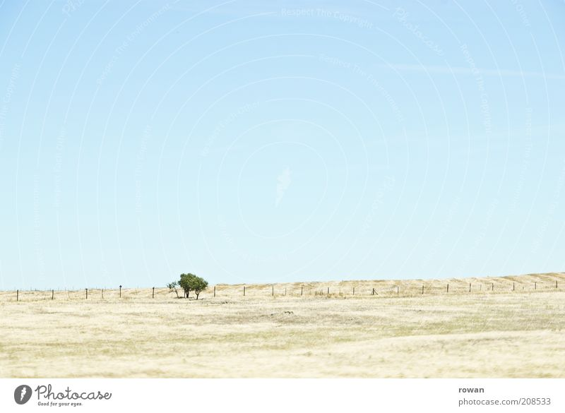 little trees Environment Nature Landscape Sand Cloudless sky Beautiful weather Warmth Drought Tree Field Hill Desert Infinity Hot Bright Dry Steppe Colour photo