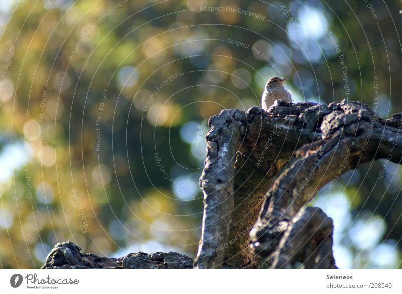 Nature Tree Plant Summer Animal Environment Autumn Bird Weather Sit Branch Vantage point Tree trunk Sparrow Passerine bird