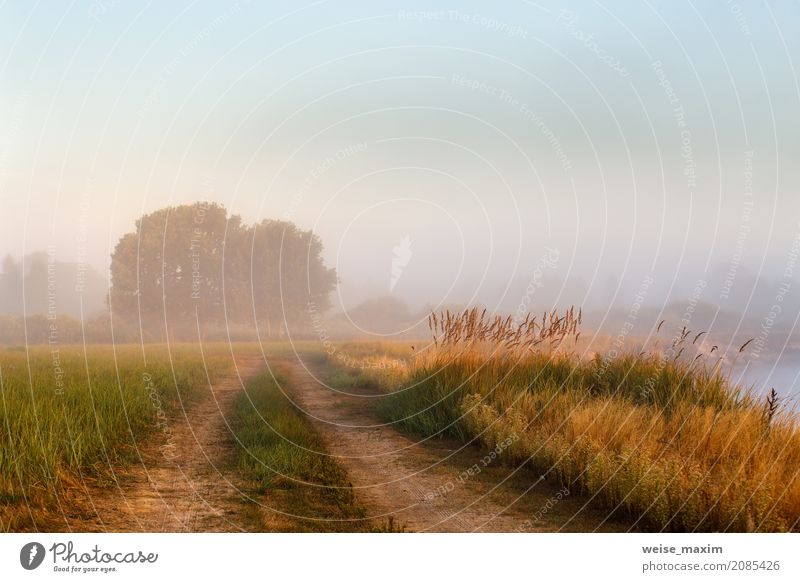 Cane bushes, oak wood, dirt country road on a misty river Sky Nature Vacation & Travel Plant Blue Summer Green Water Tree Landscape Forest Meadow Lanes & trails