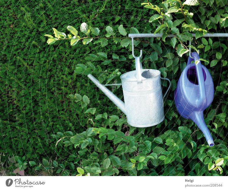 Just hang out... Nature Plant Summer Beautiful weather Bushes Leaf Foliage plant Park Watering can Rod Checkmark Metal Plastic Hang Growth Authentic Simple Blue