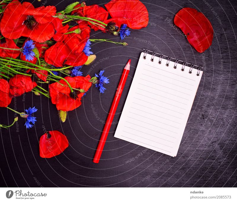 Empty paper notebook with a red pencil Feasts & Celebrations Valentine's Day Mother's Day Plant Leaf Blossom Paper Bouquet Blossoming Natural Blue Green Red