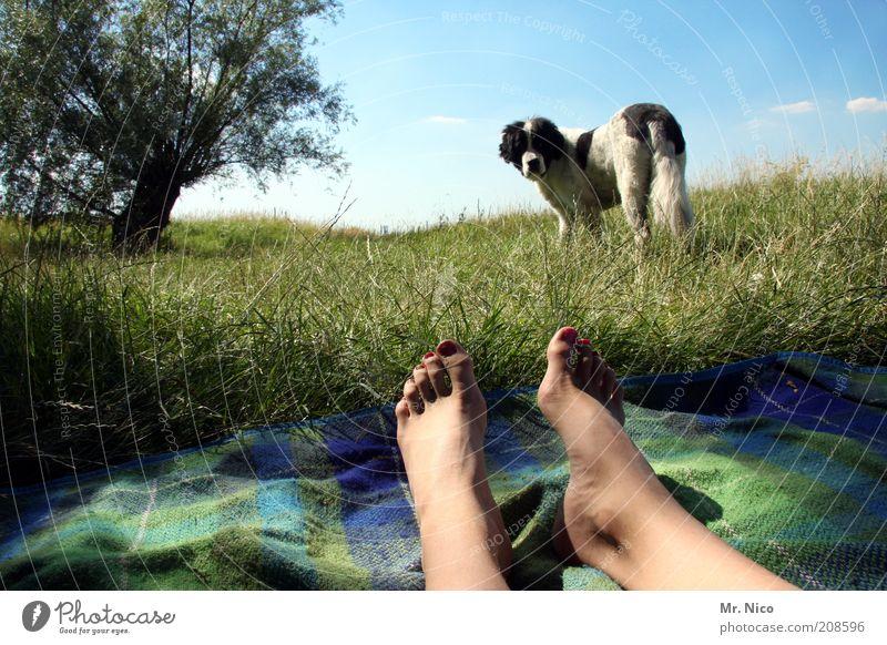 I'll be off. Trip Summer Skin Legs Feet Nature Landscape Sky Beautiful weather Tree Grass Hill Pet Dog Lie Green Contentment Observe Landseer Puppydog eyes