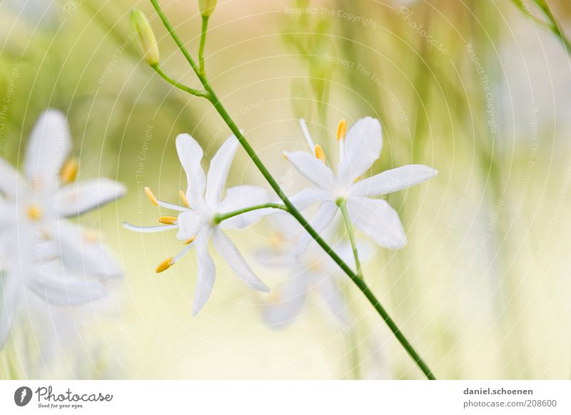 White Flower Green Plant Summer Yellow Meadow Blossom Bright