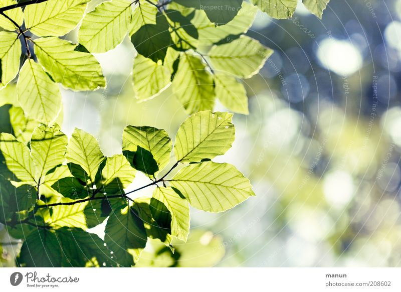 Nature Green Beautiful Tree Summer Leaf Life Spring Bright Multiple Growth Branch Fantastic Positive Ease Environmental protection