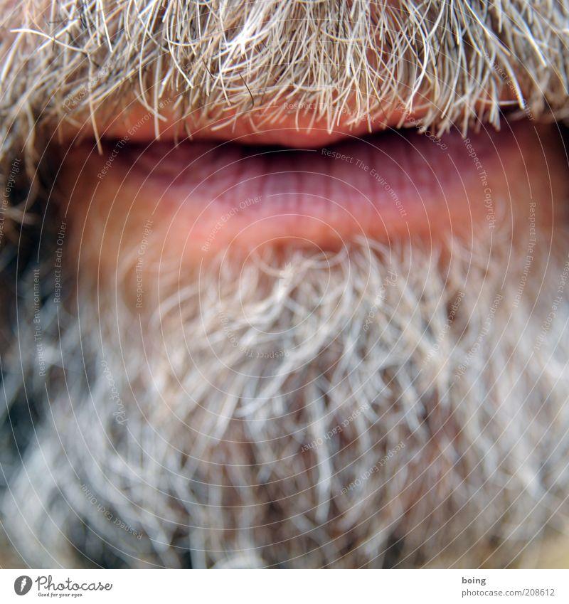 Man Senior citizen To talk Gray Mouth Masculine Growth Lips Symbols and metaphors Facial hair Breathe Thorny Beard Beard hair Groomed Face