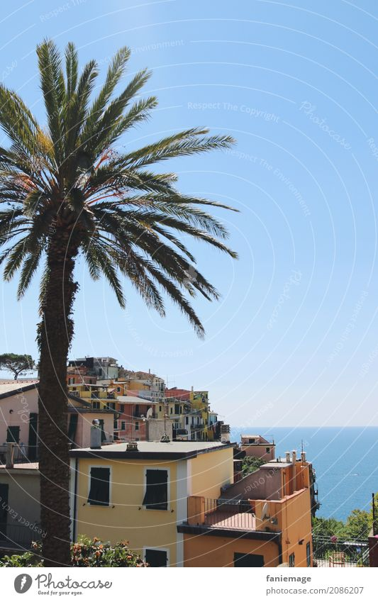 Cinque Terre IX Nature Village Fishing village Small Town Port City Downtown Old town House (Residential Structure) Esthetic Corniglia Palm tree Multicoloured