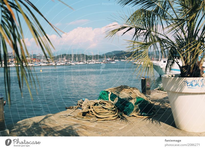 Cinque Terre XIV - La Spezia Town Port City Hot Liguria Italy Palm tree Mediterranean sea Harbour Watercraft Linen Rope Fishery Fishing (Angle) Summer