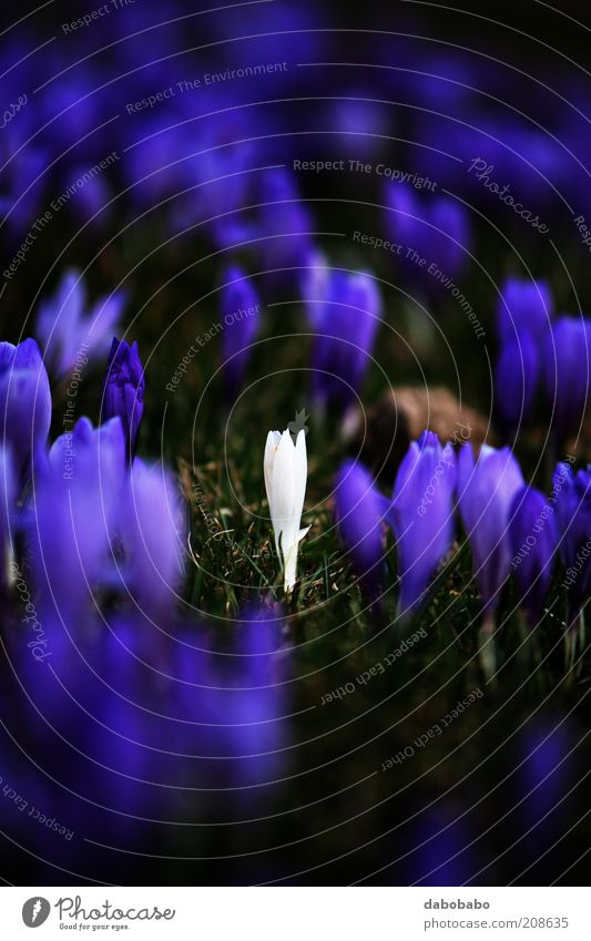 like no one Nature Beautiful Flower Plant Calm Loneliness Colour Meadow Blossom Mountain Freedom Contentment Perspective Change Violet