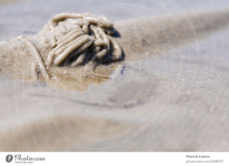 Nature Water Ocean Summer Beach Animal Sand Landscape Coast Environment Island Climate Feces Wild animal Elements
