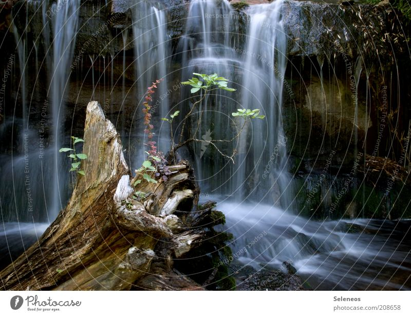 small oasis Vacation & Travel Tourism Trip Environment Nature Landscape Water Climate Plant Rock Waterfall Oasis Wet Natural Relaxation Pure Flow Movement