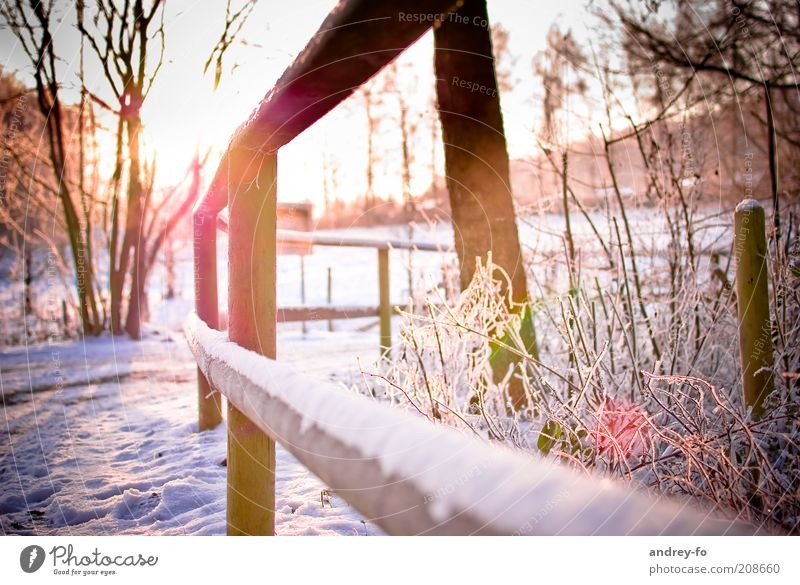 Sunset in winter Nature Sunrise Sunlight Winter Beautiful weather Ice Frost Snow Tree Garden Lanes & trails Wood White Fence Winter's day Cold