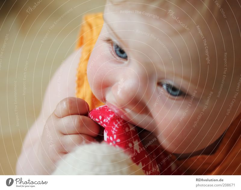 Human being Child Red Joy Playing Small Happy Infancy Blonde Baby Fingers Curiosity Toys Discover Attempt Experience