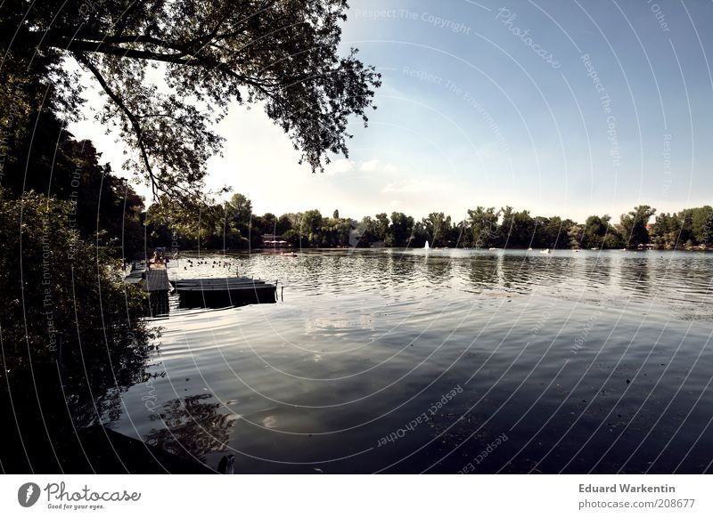 Weißensee Environment Nature Landscape Plant Elements Air Water Sky Climate Weather Beautiful weather Lakeside Rowboat Moody Freedom Leisure and hobbies Summer