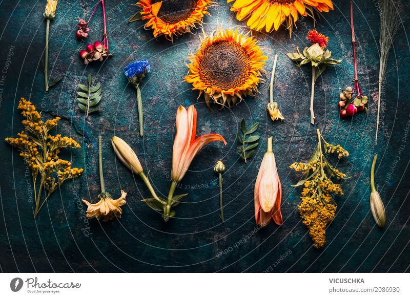 Autumn flower composing on dark background Style Design Nature Plant Summer Flower Leaf Blossom Decoration Bouquet Yellow Arranged Composing Sunflower