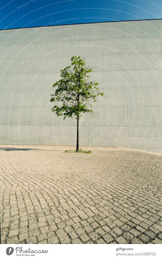 loner Sky Cloudless sky Plant Tree Wall (barrier) Wall (building) Growth Resist Loneliness Street Cobblestones Paving stone Gray Shadow Unnatural Concrete