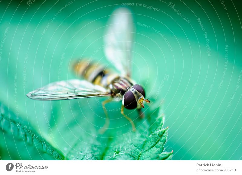 Nature Beautiful Green Plant Summer Leaf Eyes Animal Contentment Wait Fly Environment Large Sit Animal face Wing