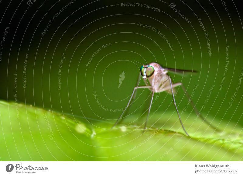 I'd like to know her name. Environment Nature Animal Spring Summer Plant Forest Fly Wing 1 Observe Sit Gray Green Black Insect Compound eye Colour photo