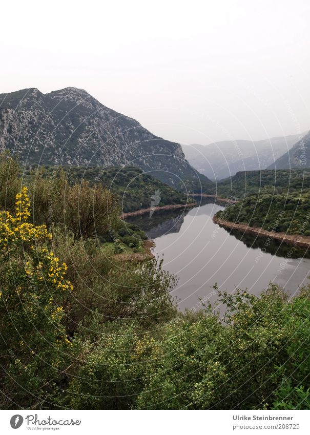 Life is a long calm river Beautiful Calm Mountain Nature Landscape Water Fog Tree Bushes Rock River bank Growth Green Transience Valley Wilderness Sardinia Haze
