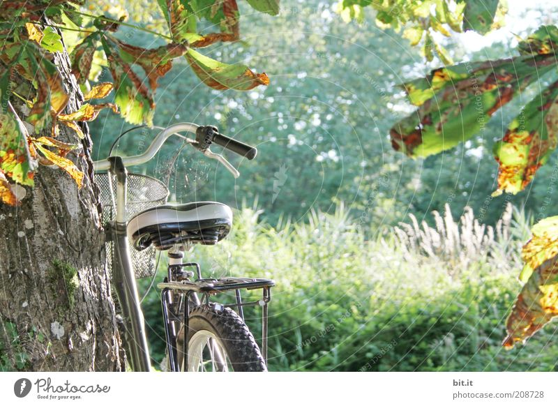 turned off Far-off places Freedom Summer Summer vacation Nature Landscape Sunlight Autumn tree bushes luck Bicycle Autumn leaves Autumnal colours Bicycle saddle
