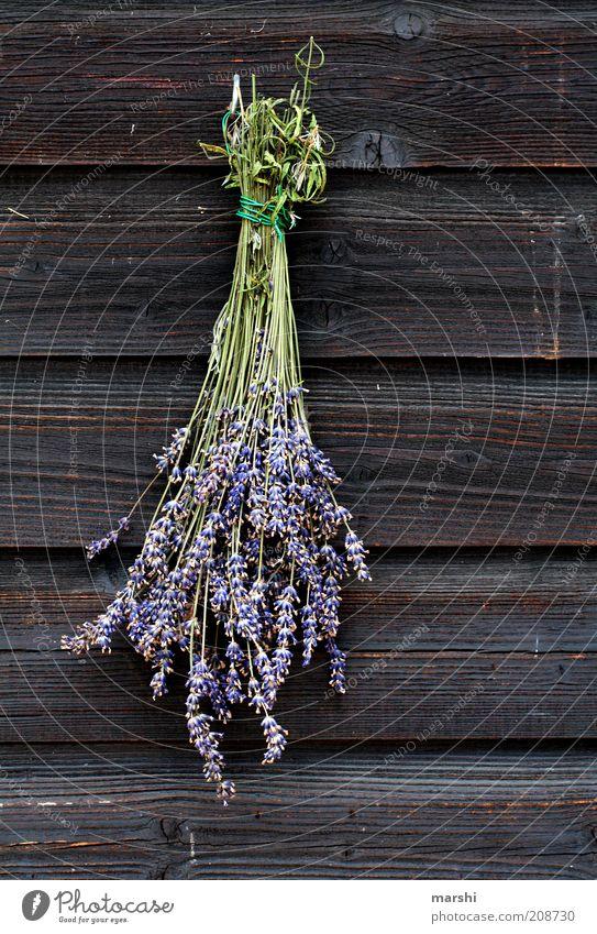 lavender Nature Spring Summer Plant Flower Blossom Brown Violet Lavender Dried Fragrance Texture of wood Suspended Decoration Colour photo Exterior shot Bundle