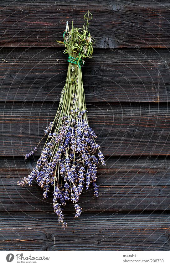 Nature Flower Plant Summer Blossom Spring Brown Herbs and spices Violet Decoration Fragrance Wood Nostalgia Lavender Dried Suspended