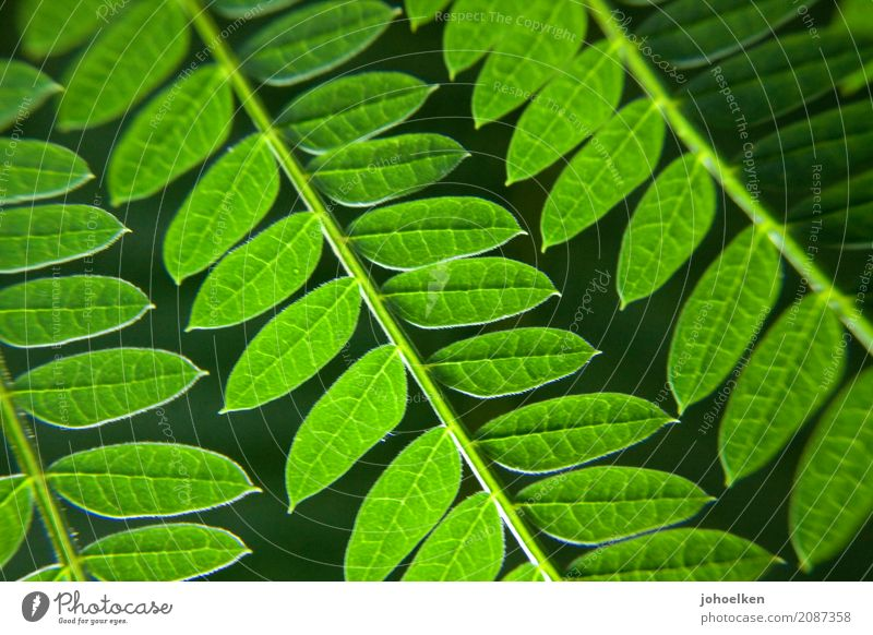 Nature Plant Green Leaf Forest Environment Yellow Growth Idyll Bushes Soft Virgin forest Breathe Foliage plant