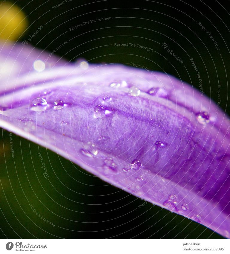 Nature Plant Green Water Flower Calm Religion and faith Blossom Illuminate Glittering Drops of water Transience Hope Wellness Belief Violet