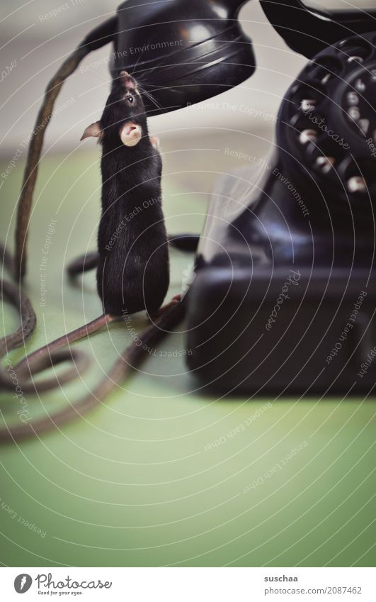 phone mice? Mouse Animal Pet Mammal Tails Cable To call someone (telephone) Telecommunications Receiver Earpiece Old phone Telephone Rotary dial Bakelite Phone