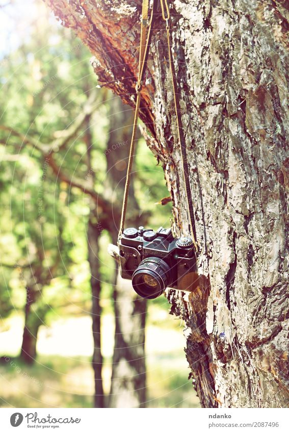 Old retro film camera hanging on a tree Sun Camera Nature Tree Grass Park Forest Retro Green Equipment Hanging trunk spring vintage Ray bark branch background
