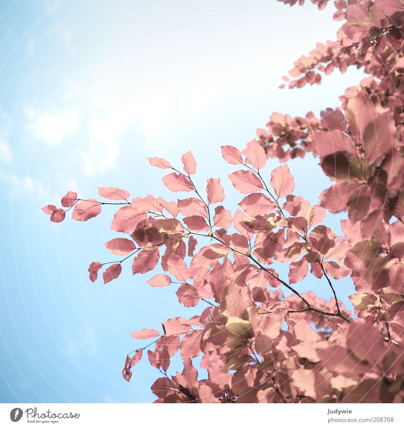 Nature Sky Tree Sun Blue Plant Summer Leaf Emotions Spring Dream Pink Environment Free Hope Esthetic