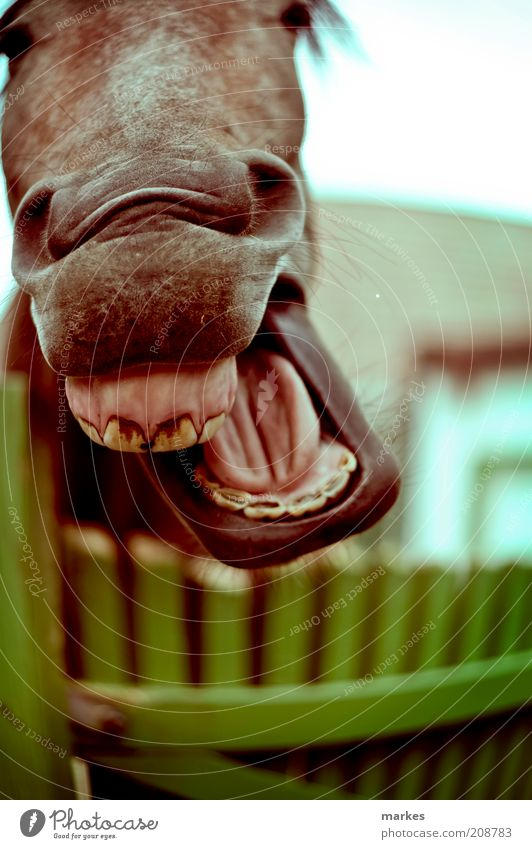 who is mr. ed? Animal Farm animal Horse Animal face 1 To enjoy Laughter Happiness Funny Multicoloured Emotions Joy Happy Grinning hose Colour photo