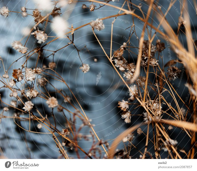 Withered Plant Grass Bushes Leaf Blossom Blade of grass Stalk To dry up Old Dry Decoration Colour photo Interior shot Close-up Detail Structures and shapes