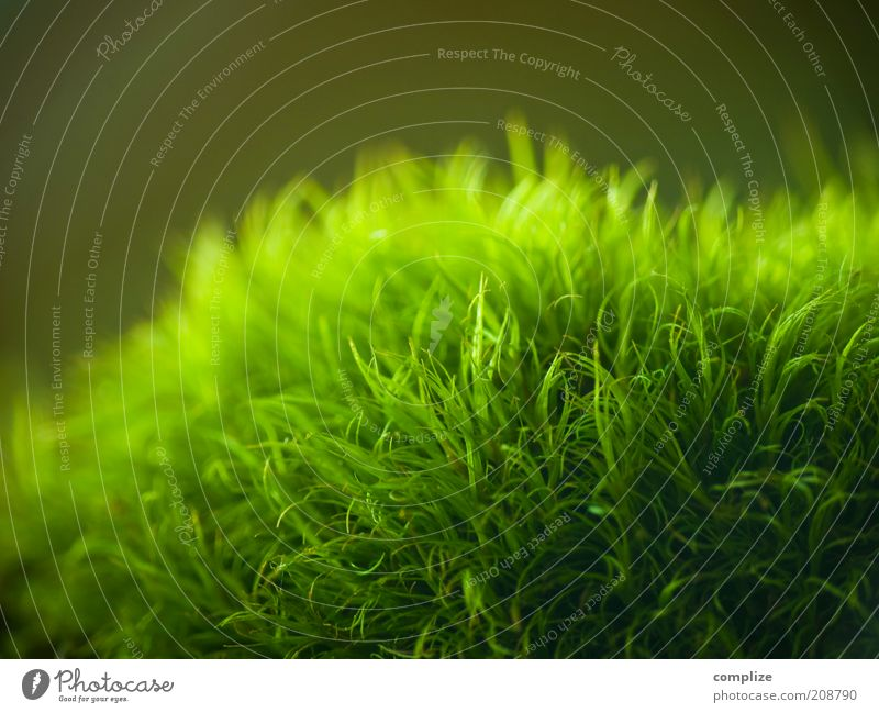 nothing going on Environment Nature Plant Water Foliage plant Exotic To enjoy Warmth Soft Green Environmental protection Moss Carpet of moss Colour photo