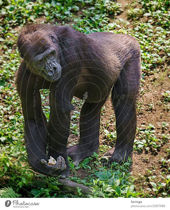 Animal Wild animal Pelt Hang Animal face Zoo To feed Paw Monkeys Animal tracks Gorilla