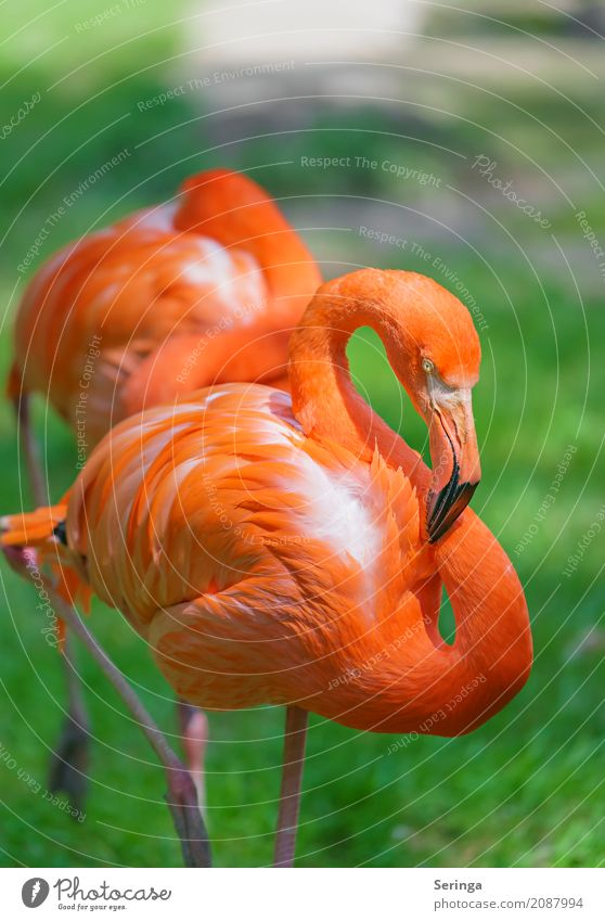 Shining Inferno Water Spring Summer Grass Animal Wild animal Bird Flamingo Animal face Wing Zoo 1 Illuminate Orange Beak Feather Relaxation Colour photo