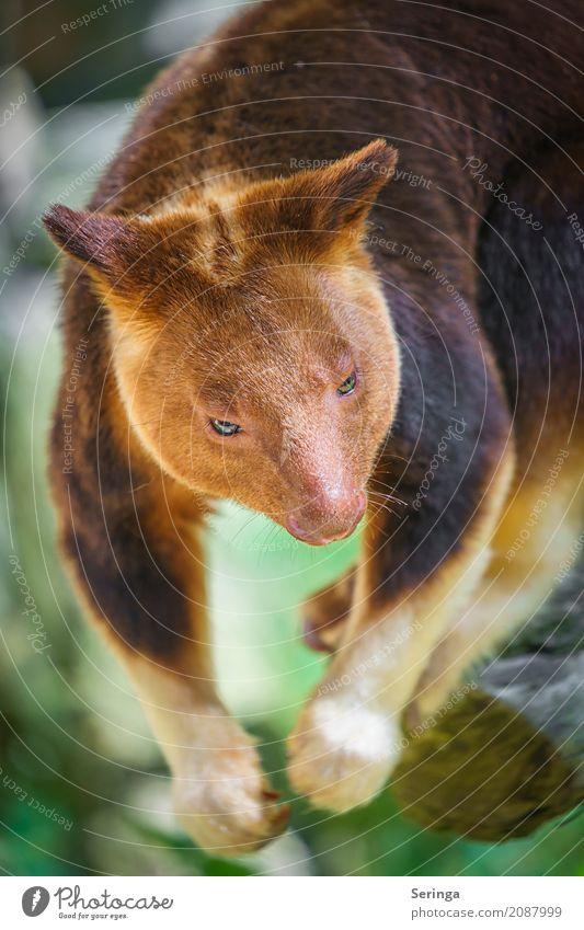 Tree Animal Brown Wild animal Beautiful weather Pelt Hang Animal face Zoo Paw Claw Kangaroo