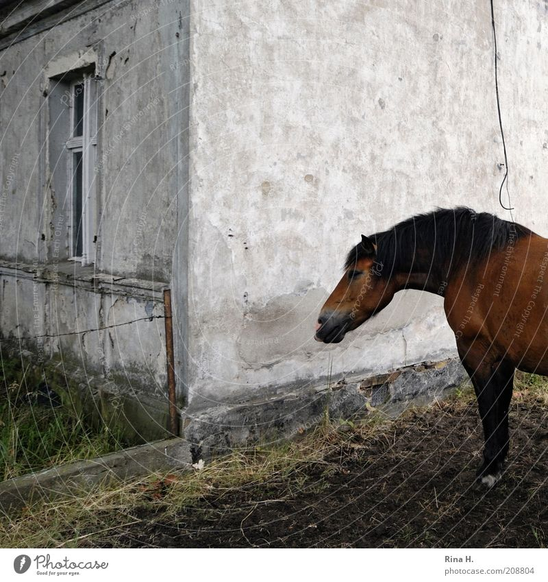 There's a horse in the garden. Animal Pet Horse 1 Stand Poverty Brown Rural House (Residential Structure) Gloomy Subdued colour Exterior shot Deserted