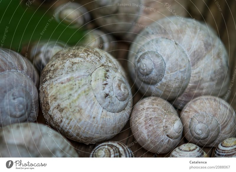 snail shells Nature Animal Garden Snail Vineyard snail Group of animals Snail shell Esthetic Brown Gray Green Pink Black Variable Vacancy Environment Transience